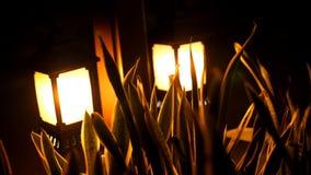 Notte, le piccole lanterne splendono nei cespugli Luce solare piccola del giardino, lanterne nel letto di fiore Disegno del giard stock footage