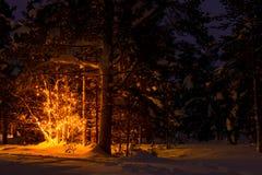 Notte nella foresta e nella ghirlanda di Snowy di inverno sull'albero Fotografia Stock Libera da Diritti