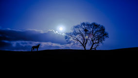 Notte profonda immagine stock