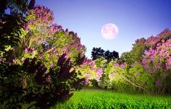 Notte romantica dei lillà Fotografia Stock