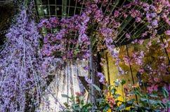 Notte Sakura al giardino dalla baia Immagini Stock