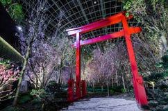 Notte Sakura al giardino dalla baia Fotografie Stock