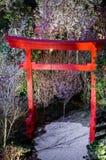 Notte Sakura al giardino dalla baia Fotografia Stock Libera da Diritti