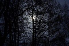 Notte scura Fotografia Stock