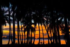 Notte tropicale con le siluette delle palme. Fotografia Stock Libera da Diritti