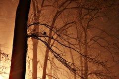 Notte in una foresta nebbiosa Fotografie Stock Libere da Diritti