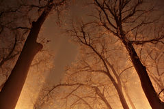 Notte in una foresta nebbiosa Immagine Stock Libera da Diritti