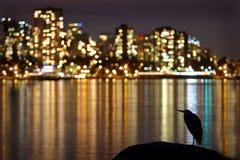 Notte urbana dell'airone Immagine Stock Libera da Diritti