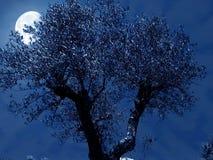 Notte verde oliva Fotografia Stock Libera da Diritti