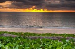 Notuje drewno z plażowego ranku chwałą na zmierzchu i plaży Zdjęcia Stock