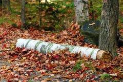 Notuje w spadek w Michigan kolorowych drzewach Zdjęcie Stock