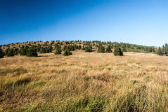 Nountain meadow with  trees and hill in summer Jeseniky mountains Stock Image
