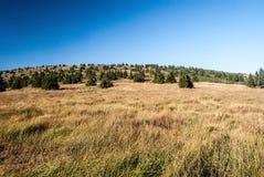 Nountainweide met bomen en heuvel in de bergen van de zomerjeseniky Stock Afbeelding