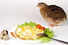 Nourishing breakfast of quail eggs and estonian quail breed Royalty Free Stock Photography