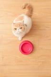 Nourriture beging de chat mignon Photo libre de droits