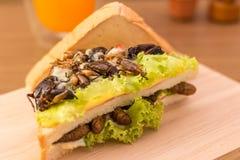 Nourriture d'insecte photos libres de droits