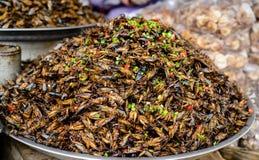 Nourriture d'insectes chez le Cambodge Images libres de droits
