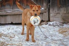Nourriture de attente de chien photographie stock