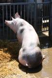 Nourriture de attente dans la ferme d'été Photos libres de droits