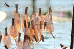 Nourriture de calmar en Thaïlande Photographie stock