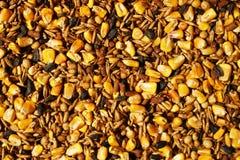 Nourriture de cerfs communs de Whitetail Image libre de droits