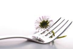 Nourriture de fleur Photo stock