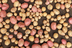 Nourriture de légumes crus de pommes de terre sur renvoyer pour la texture et le fond de modèle Images stock