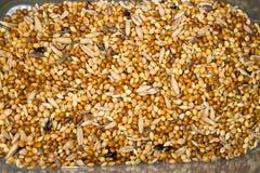 Nourriture de perroquet Image stock