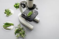 Nourriture de sécurité Laboratoire pour l'analyse alimentaire Herbes, verts sous le microscope sur l'espace gris de copie de vue  photo stock