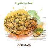 Nourriture de végétarien de croquis d'aquarelle de vecteur Nourriture d'Eco Images libres de droits