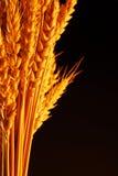 nourriture fondamentale Images libres de droits