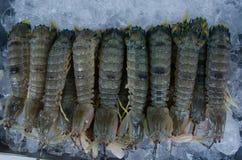 Nourriture fraîche de crevette de mante Photos stock