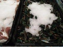 Nourriture fraîche de mollusques et crustacés de mer à la mer de Java image libre de droits