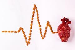 Nourriture, modèle de coeur et cardiogramme sains d'amande Abstrac médical photo libre de droits