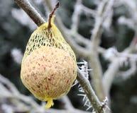 Nourriture pour des oiseaux sur un arbre Image libre de droits