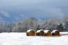 Nourriture pour l'hiver Photo libre de droits
