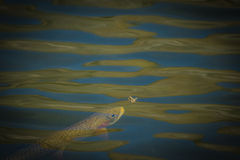 Nourriture pour poissons photos libres de droits