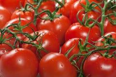 Nourriture rouge de tomate Photographie stock libre de droits