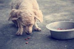 Nourriture sèche Photo libre de droits
