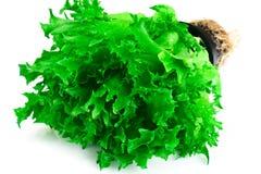 Nourriture saine et de régime : salade verte d'isolement sur le fond blanc Photographie stock