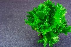 Nourriture saine et de régime : salade verte d'isolement sur le fond foncé Photographie stock libre de droits