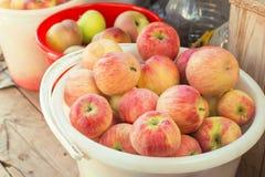 Nourriture végétarienne Moisson des fruits mûrs utiles de vitamine frais photographie stock libre de droits