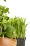 Nourriture verte saine Photo stock
