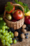 Nourritures d'automne dans un panier Photo libre de droits