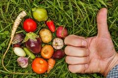 Nourritures saines nourriture crue de récolte d'automne pour des végétariens photographie stock