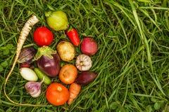 Nourritures saines nourriture crue de récolte d'automne pour des végétariens image libre de droits