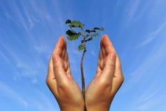 Nous aurons un bois neuf Image libre de droits