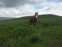 Nous avons rencontré le cheval seul parmi la vallée image stock
