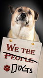 Nous les chiens de personnes Photos stock