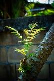 Nouveau adoucissez l'élevage de feuilles et de branches Photos stock